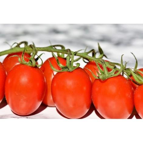 Tomates allongées au kg