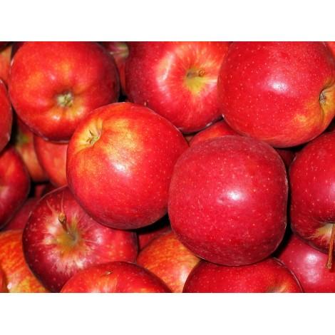 Pomme Gala vendue par 500 gr